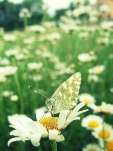 Monika Gašparini, Predah na cvijetu